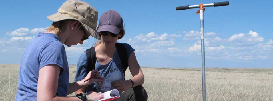 Researchers collect root samples from native prairie in Saskatchewan's Grasslands National Park